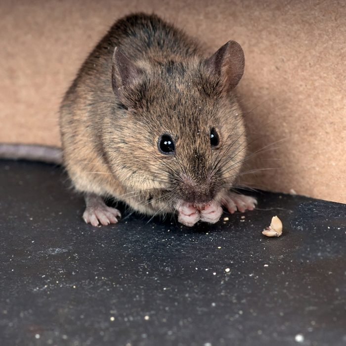 Our Mouse-Trapping Philosophy