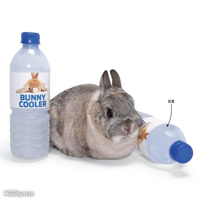 Bunny Rabbit A/C
