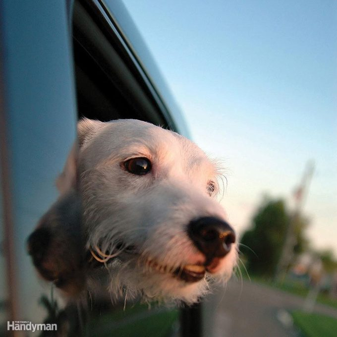 FH060611_001_HHPETS_05 dog looking out car window