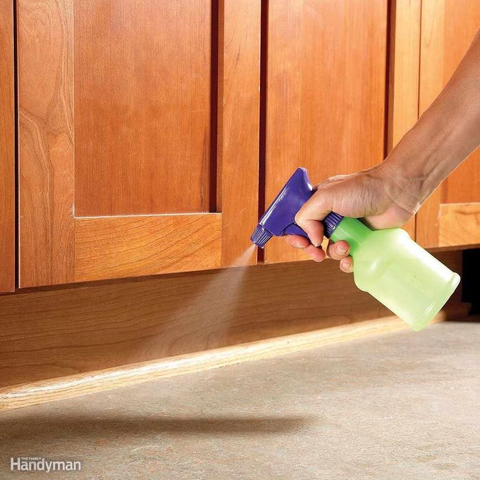 Ant Removal: Erase Ant Trails