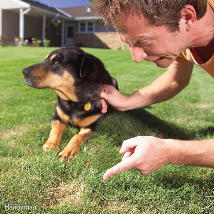 Dog-Spot Lawn Solutions