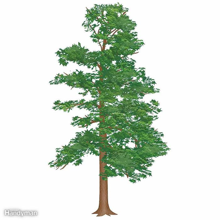 Size Up the Tree
