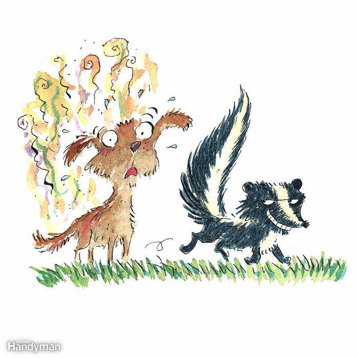 Skunk Spray Antidote