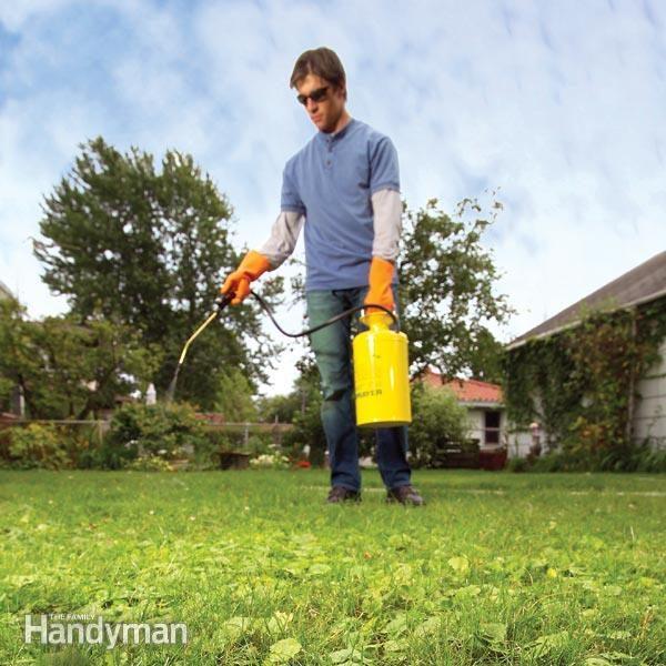 lawn weeds weeds killer