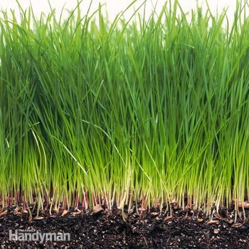 grass in soil close up