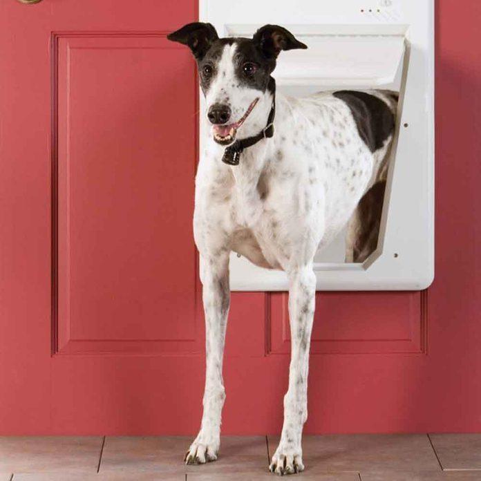 Digital Doggie Door