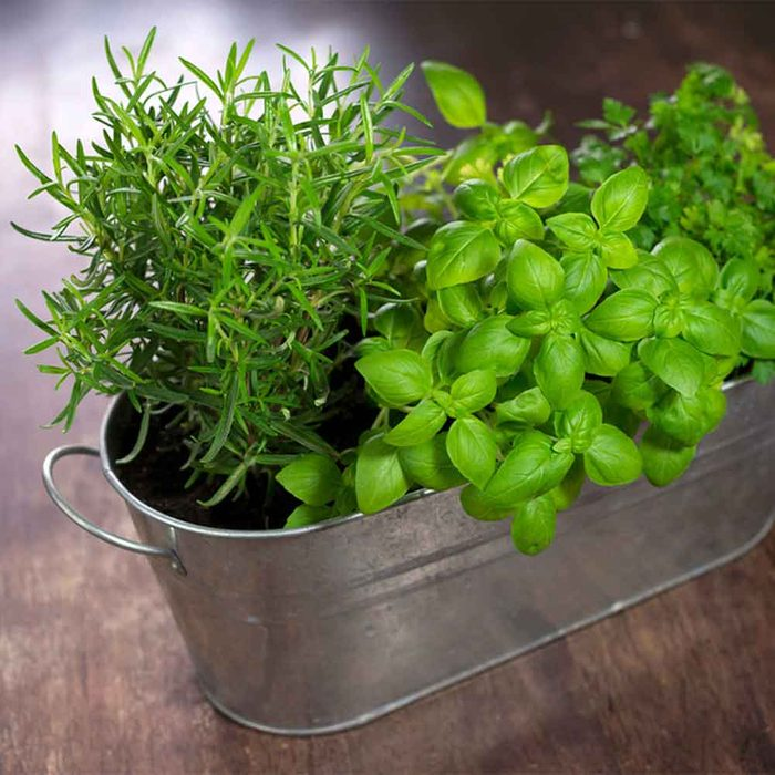 Plant that Herb Garden You Always Wanted