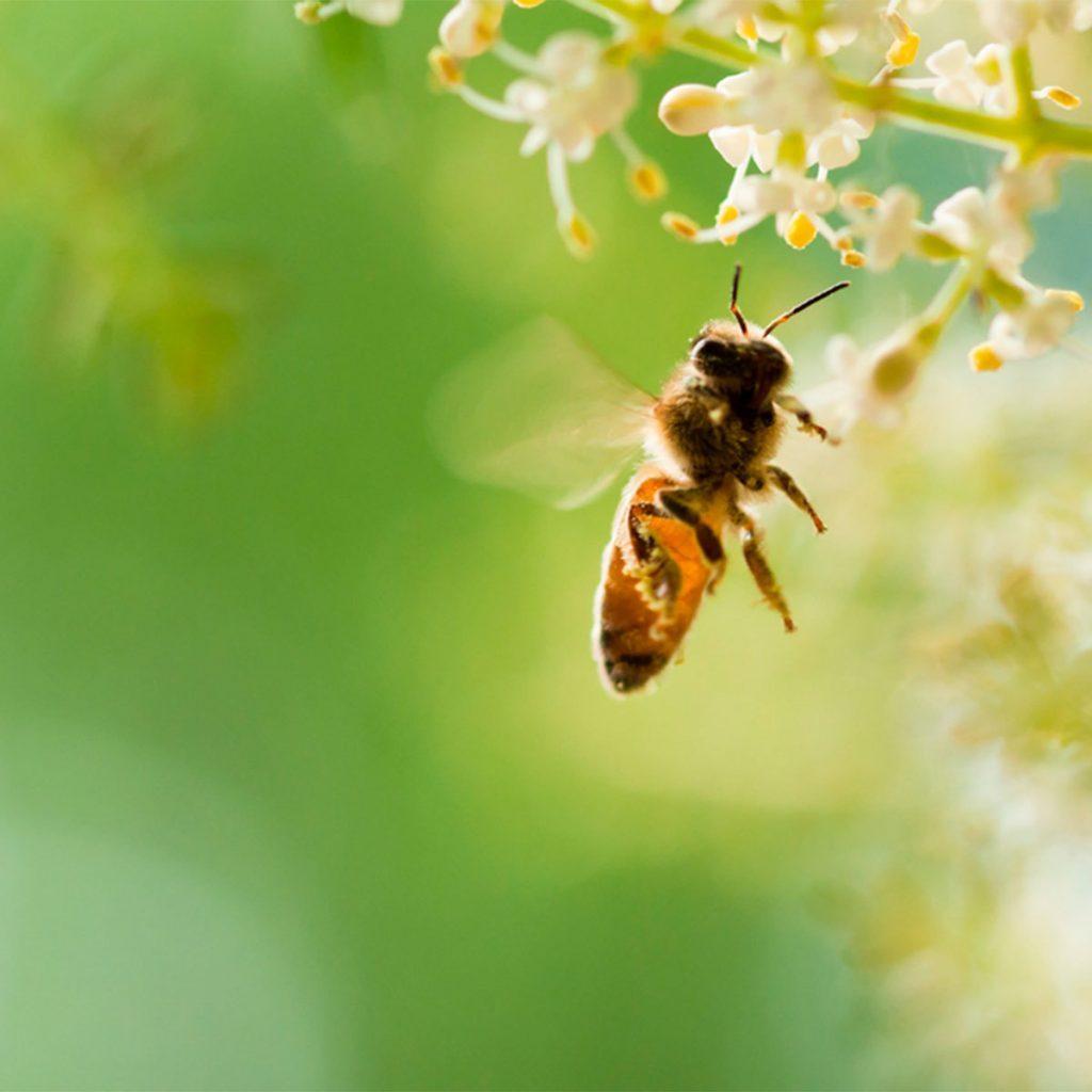 bee by flower