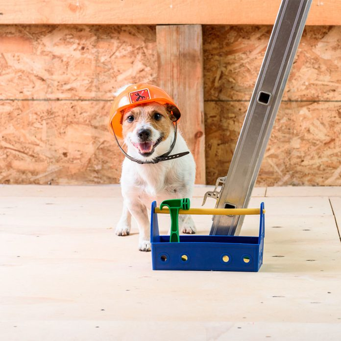 dog in construction hat