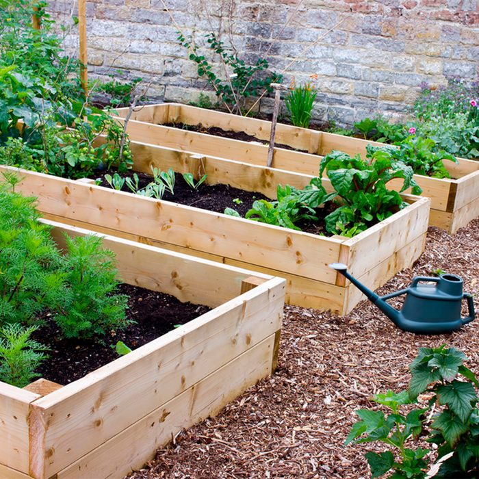 Raised Beds and Planters
