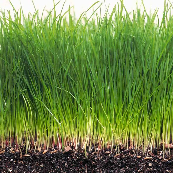 Learn How to Grow Greener Grass With These 12 Pearls of Wisdom