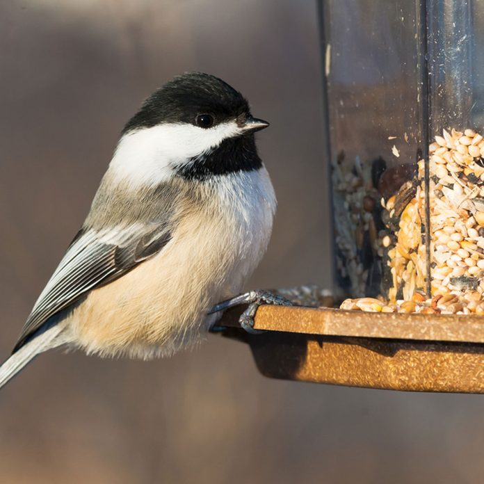 dfh17-sep020_244204252 bird at bird feeder