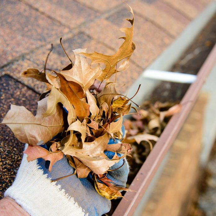 dfh17-sep020_337121540 fall ready clean the gutter from muck and leaves