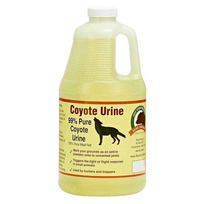 dfh17aug028_coyote-urine buy at home depot