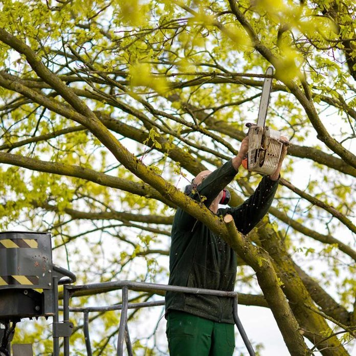 dfh17sep026-274936616-10 trim trees pruning