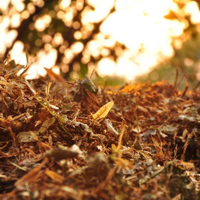 mulch your leaves fall autumn