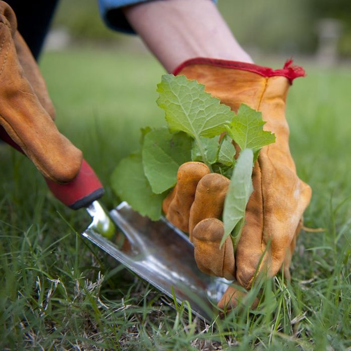 pull weeds lawn care tackle weeding