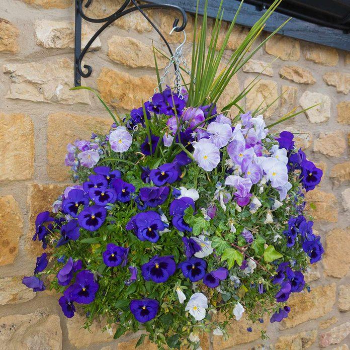 shutterstock_286520357 hanging planter flower basket pansies