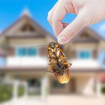 How to Handle a Cockroach Infestation