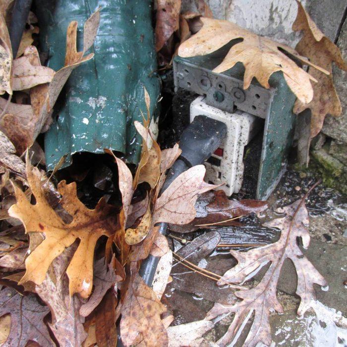 Homeless mouse shelter