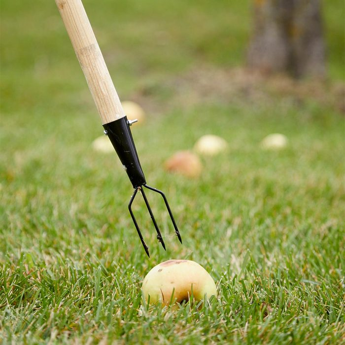 Easy Apple Spear