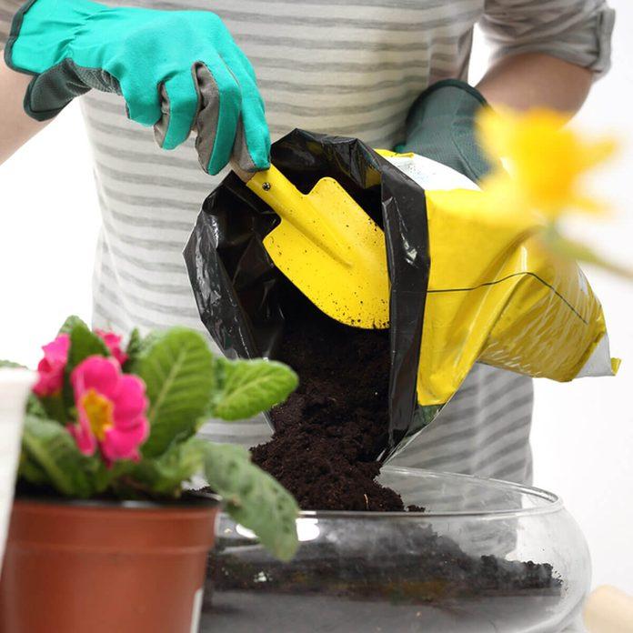 dfh3_shutterstock_368187422 repotting house plants green house gardening flowers