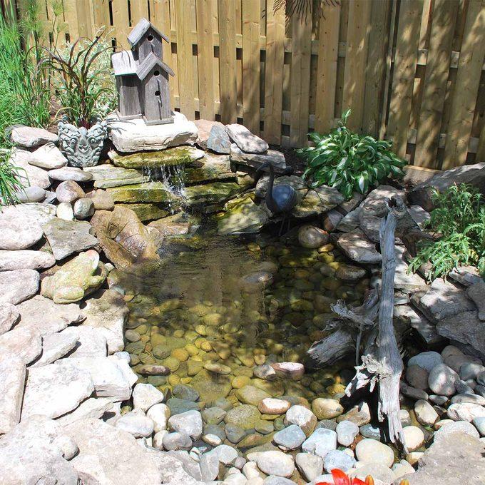 reader backyard pond