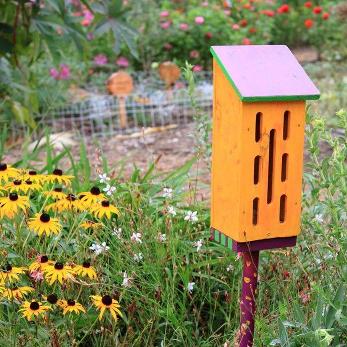 butterfly house garden _62310874_21
