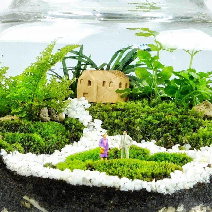 decorate_661839445 terrarium