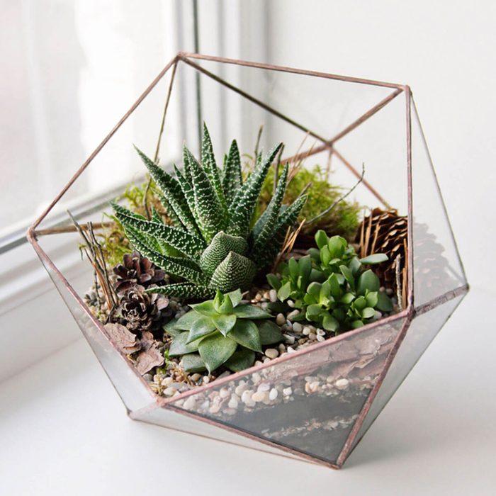 Plastic vs. Glass DIY Terrarium
