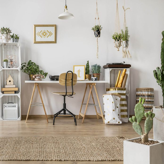 greenery_549151357 home office with plants cactus succulents