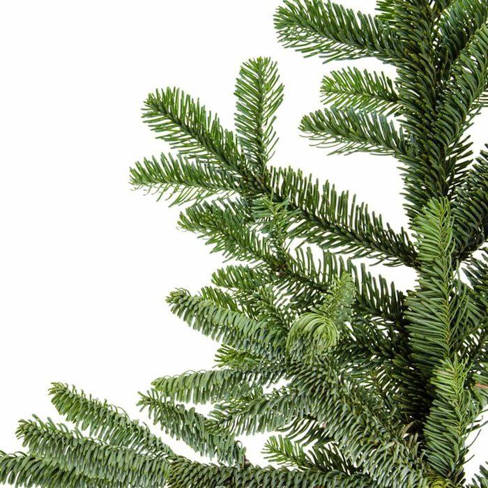 Noble fir (Abies procera Rehd)