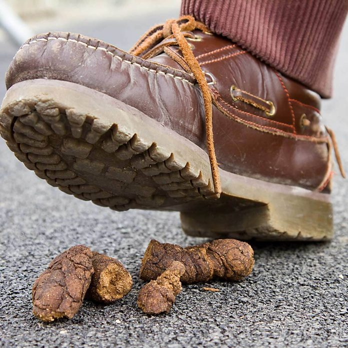 Boots shoes poop