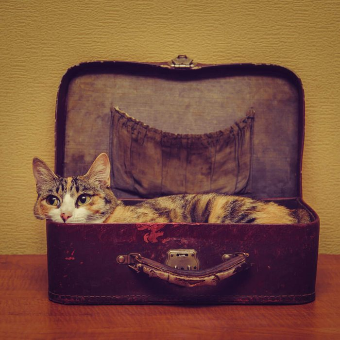 Cat Furniture: Recycled Suitcase Bed