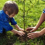 14 New Year's Resolutions for Your Yard