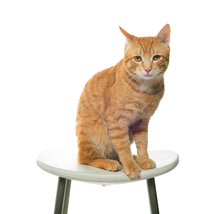 Cat Furniture: Turn a Stool Into a Multi-Level Play Zone