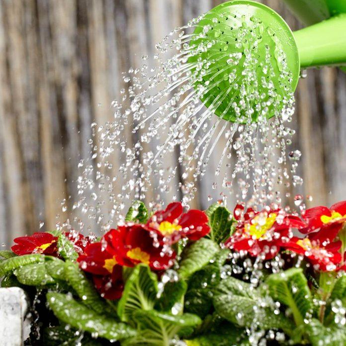 watering can _95542522_15 watering flowers gardening plants