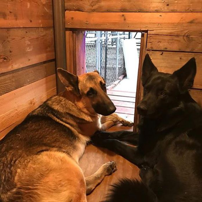 German Shepard dog house