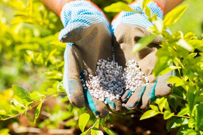 Plant fertilizer.