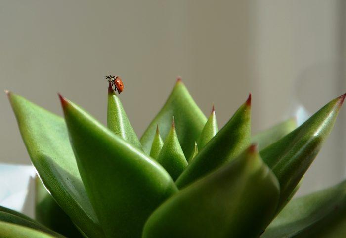 Bug on plant.
