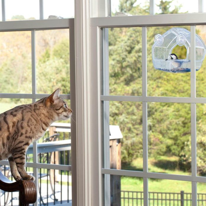 Cat-staring-out-window-at-bird-house