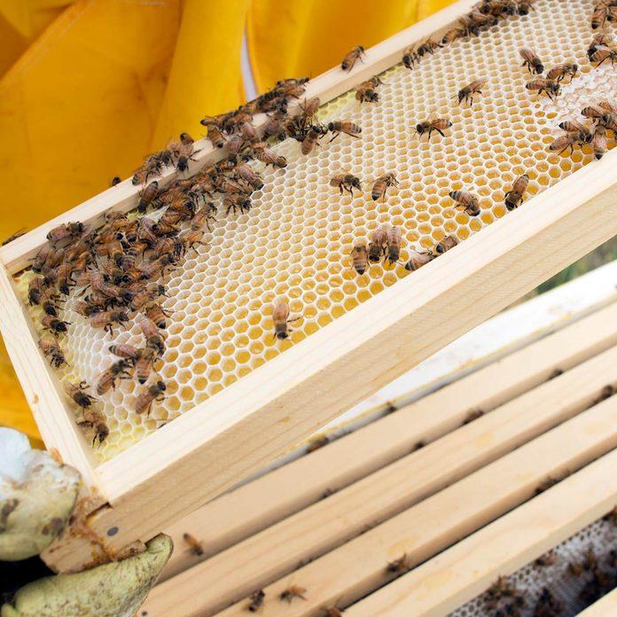 bee sensor honey combs