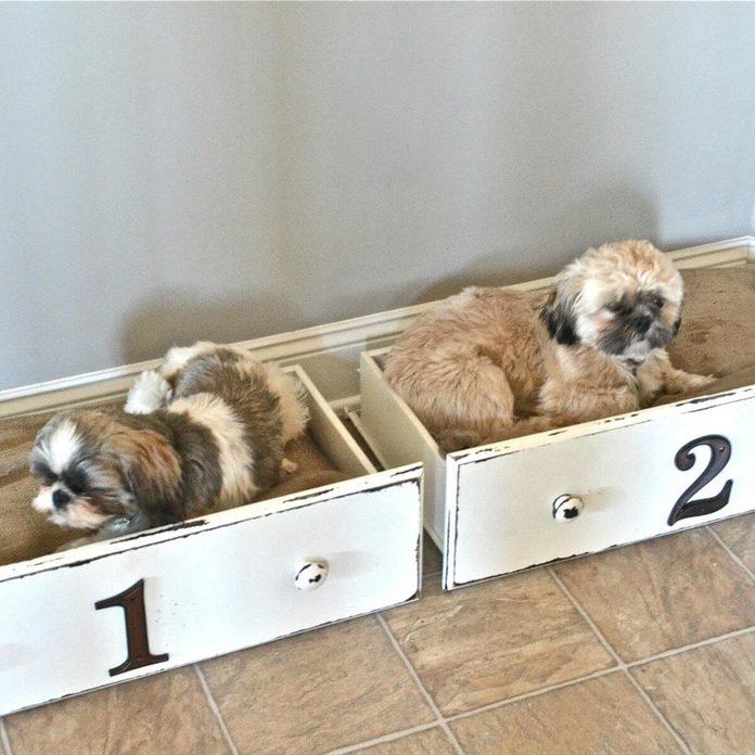 drawer dog beds