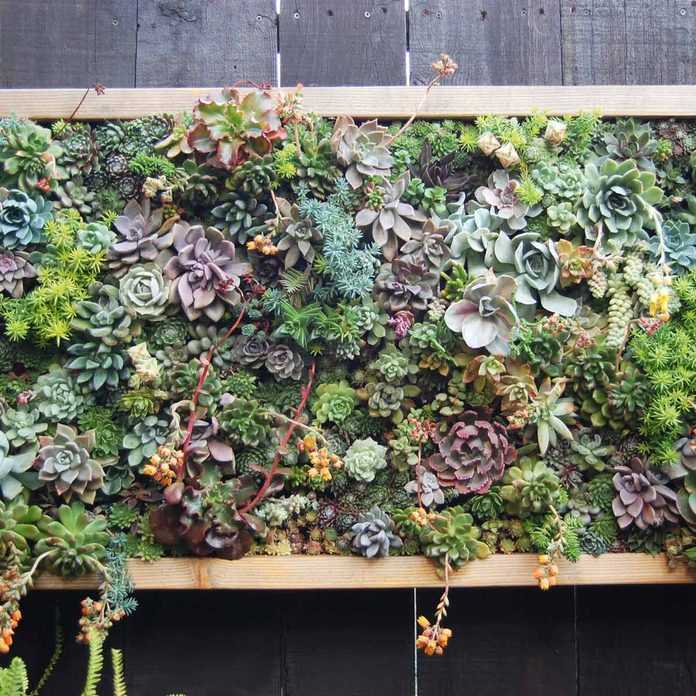 hanging frame succulent wall