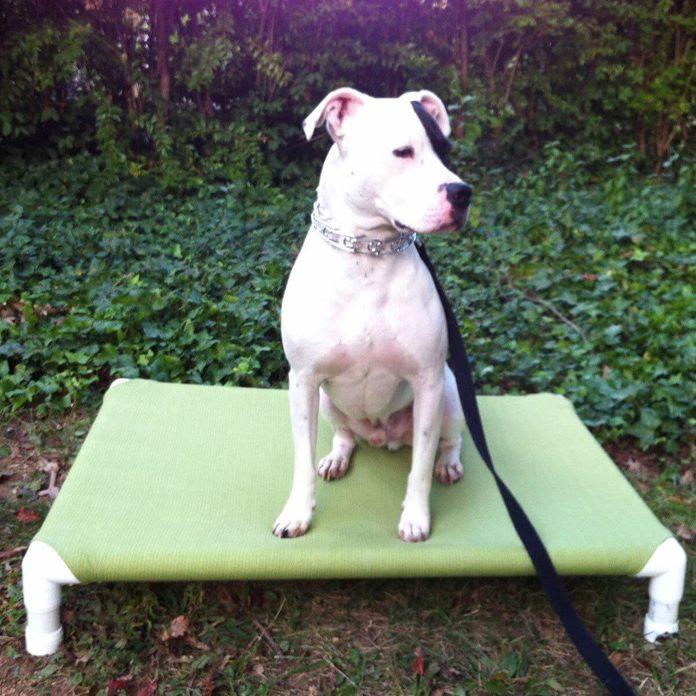 PVC Dog Bed