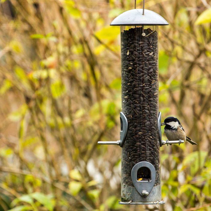 Tube-style bird feeder