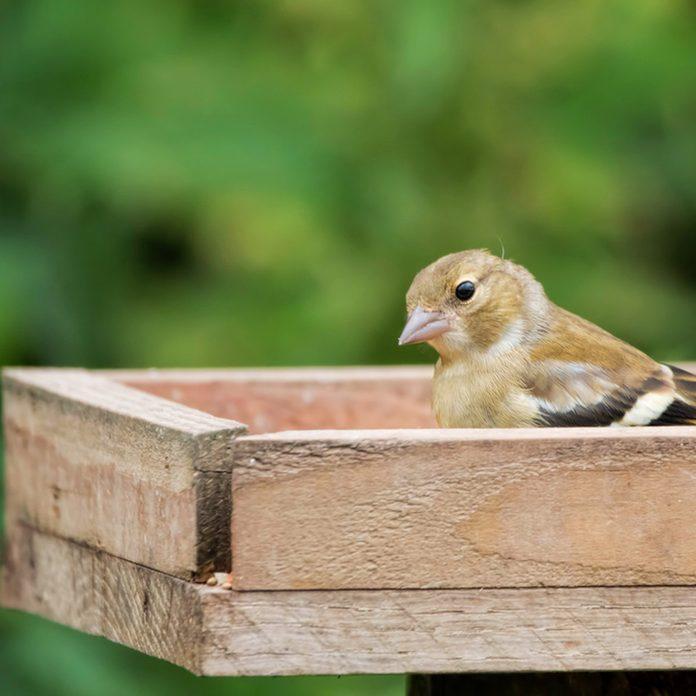 Simple wood tray bird feeder