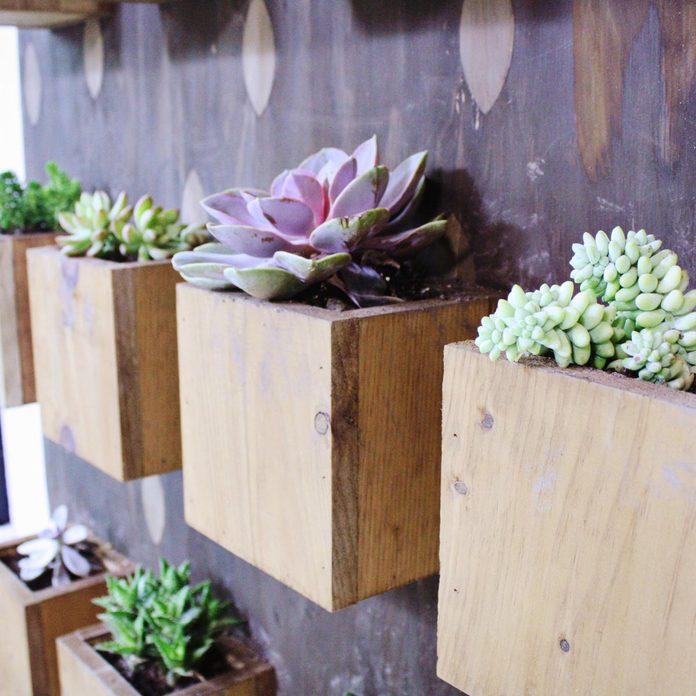 Sunroom Succulent Wall