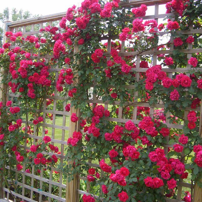 trellis flower wall