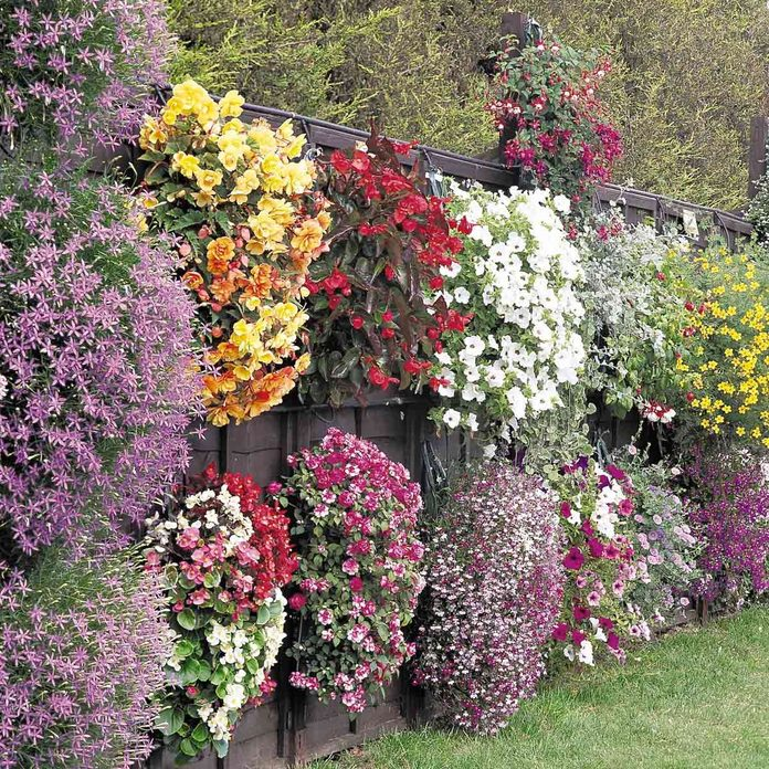 flower walls Fence with flowers